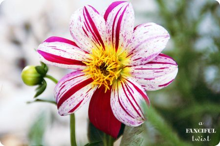 Garden petals 9
