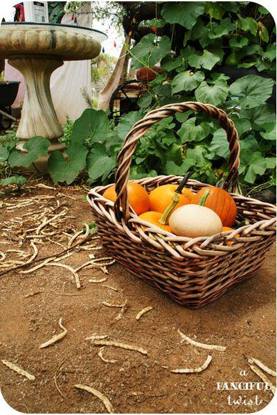 Pumpkin 9a
