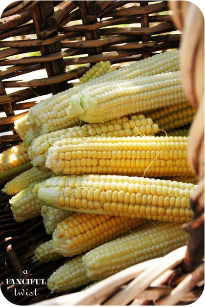 Corny 11a