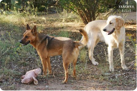 Happy pups 5