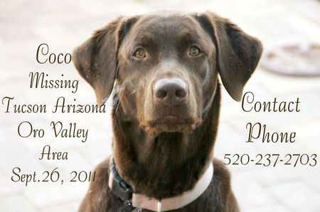 MISSING DOG CHOCOLATE LAB TUCSON