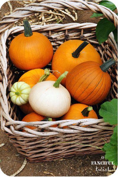 Pumpkin 10a