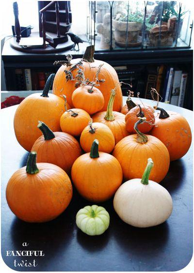 Pumpkin 12a
