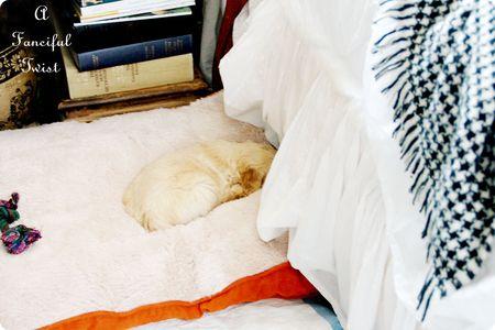 Puppy love 21