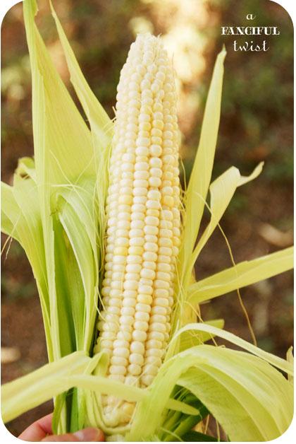 Corny 3ajpg