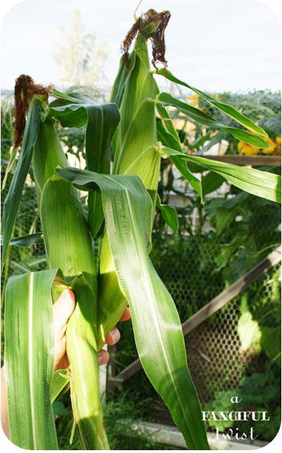 Corny 2a