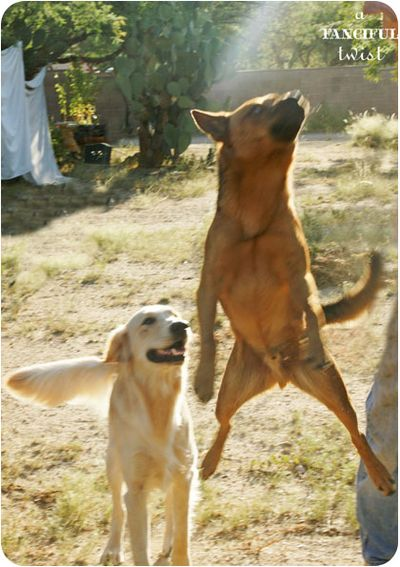Happy pups 4