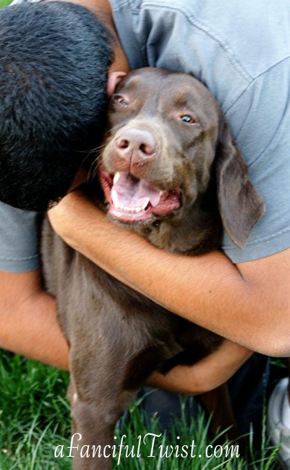 Chocolate Lab Tucson Coco Missing 1