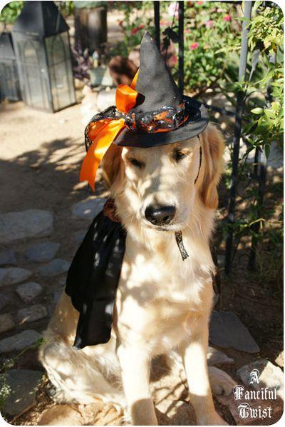 Pup Halloween 2
