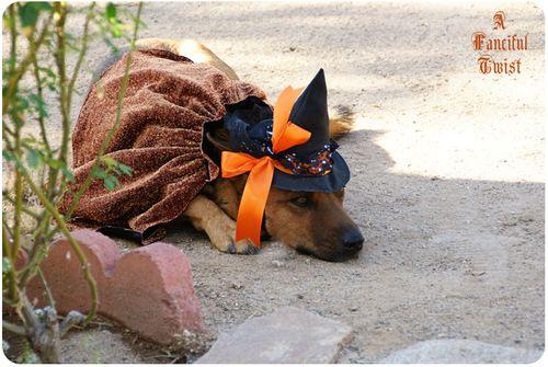Pup Halloween 5