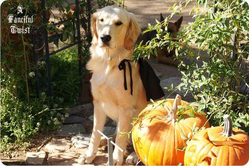 Pup Halloween 7