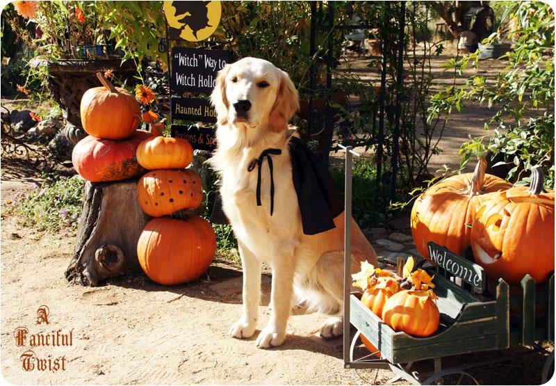 Pup Halloween 8
