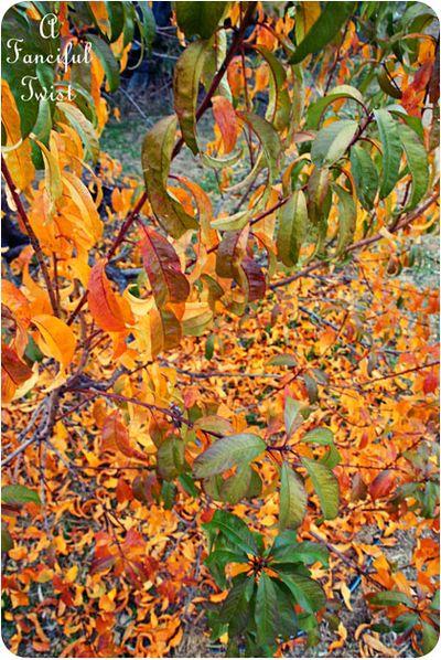 November Autumn 5