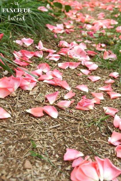 Petals 20