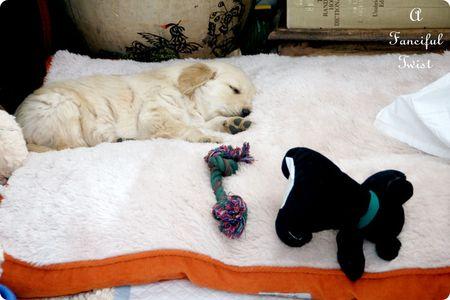 Puppy love 23