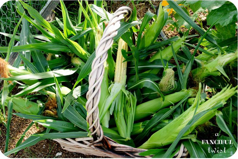 Corny 14a