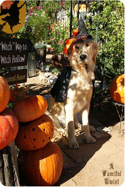 Pup Halloween 3