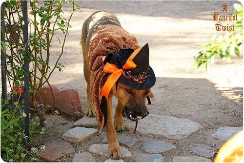 Pup Halloween 9