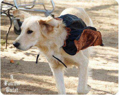 Pup Halloween 6