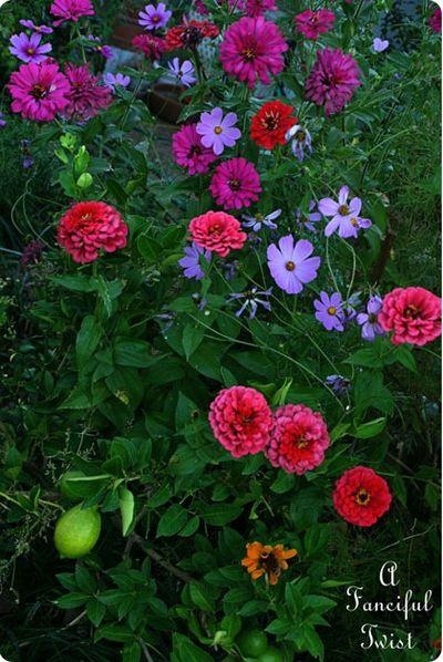 In the garden 45