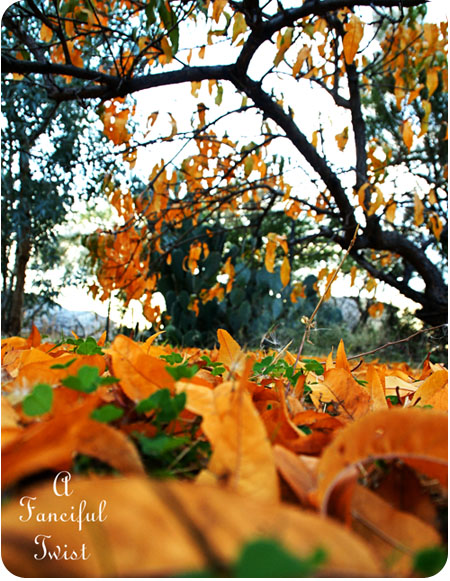 November Autumn 6
