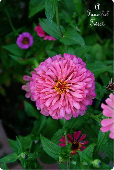 In the garden 43