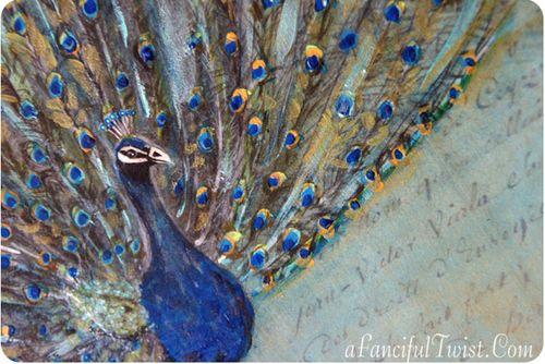 Peacock dance 9a