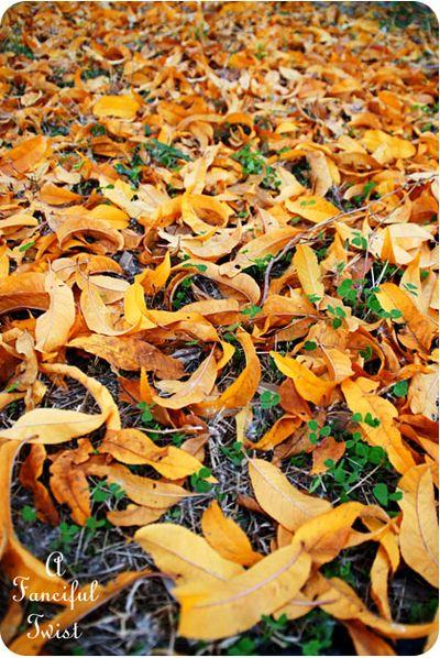 November Autumn 7