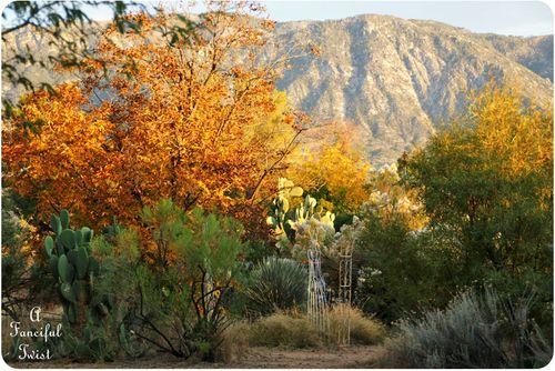 November Autumn 8