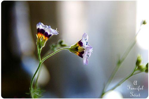 Garden blooms 4