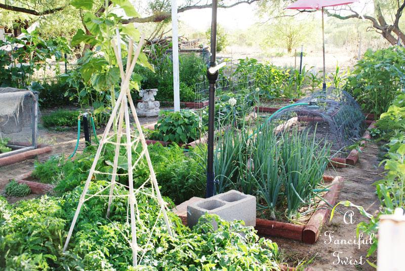 Vegetable garden 22
