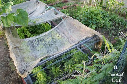 Vegetable garden 25