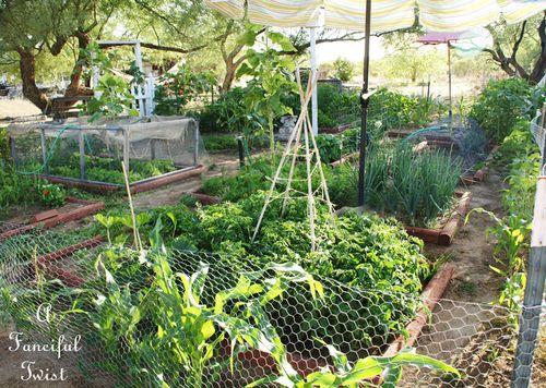 Vegetable garden 26