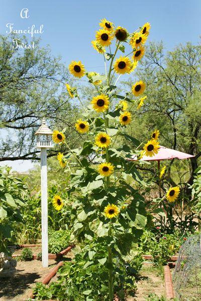 Pumpkins and sunflowers 4