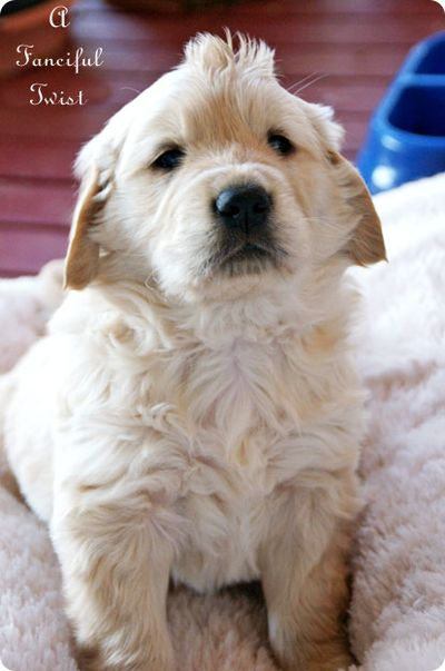 Puppy love 4