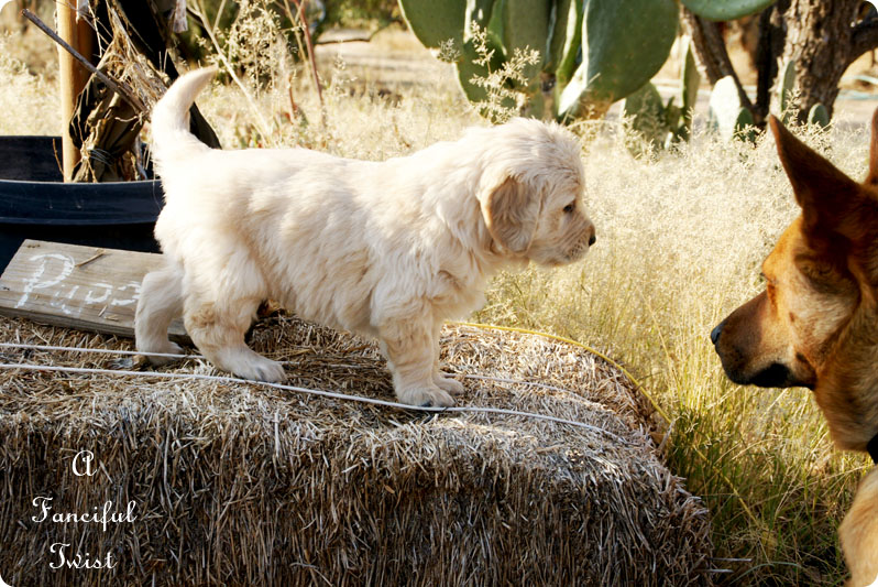 Puppy love 17