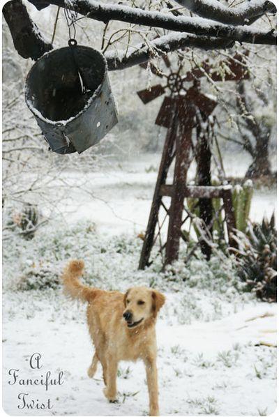 Snow garden 7