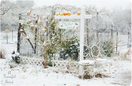 Snow garden 9