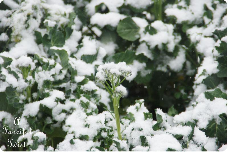 Snow garden 8