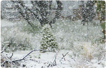 Snow garden 23