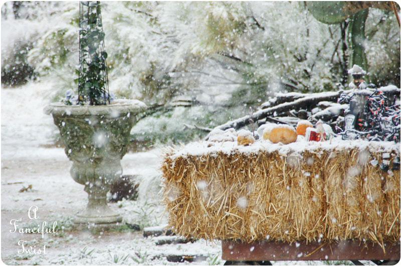 Snow garden 14