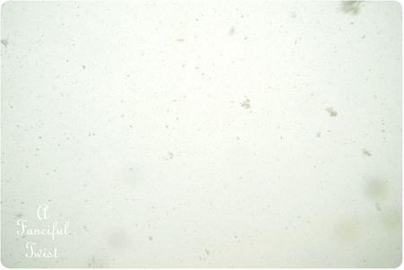Snow garden 24