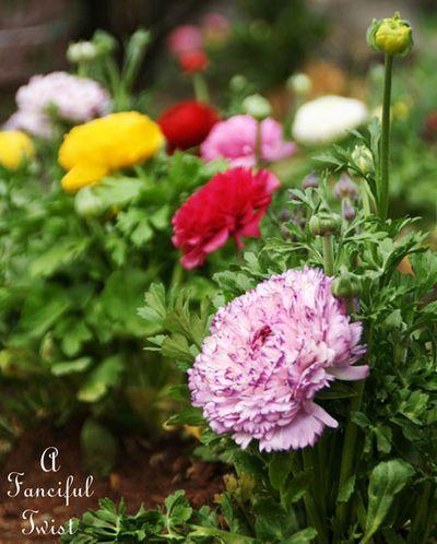 Puppiers and petals 9