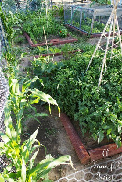 Vegetable garden 15