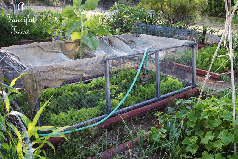 Vegetable garden 8