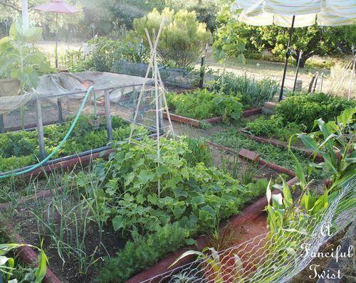 Vegetable garden 27