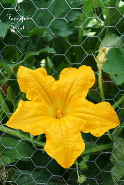 Pumpkins and sunflowers 18