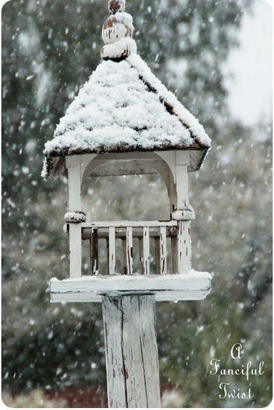Snow garden 2