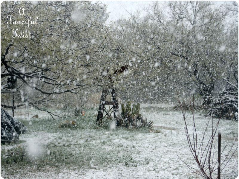 Snow garden 12