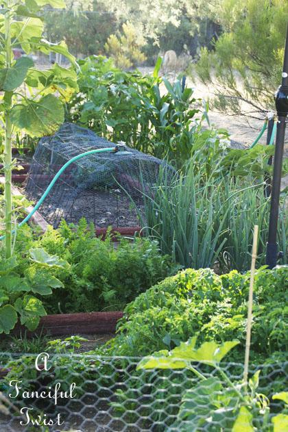 Vegetable garden 17